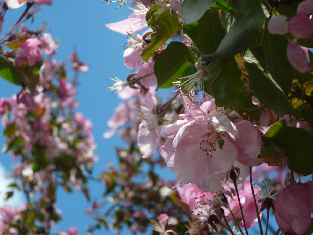 Blossom Love Amouage